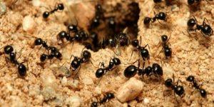 k3 5 300x150 - Yağmurda karıncalara niçin bir şey olmuyor?