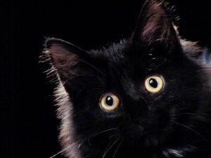 kar4 300x225 - Kara Kedi Geçmesi Niçin Uğursuzluk Getirir?