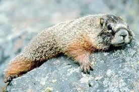 u3 3 - Hayvanlar niçin kış uykusuna yatarlar?