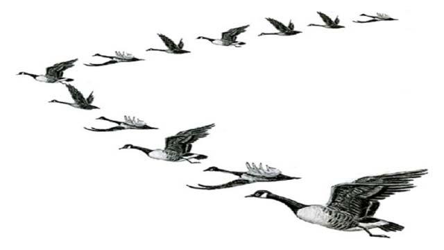 Kuşlar niçin 'V' şeklinde uçuyorlar?, okugit