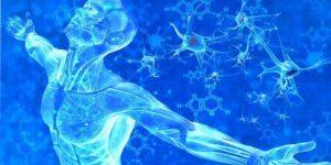 v2 1 300x150 - Vücudumuz Isısını Nasıl Ayarlıyor ?