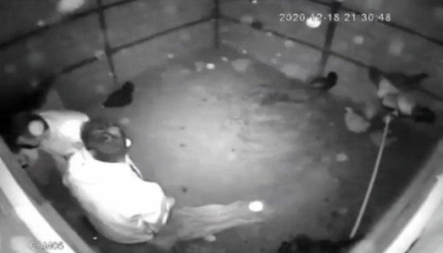 bursada tavuk hirsizligi 1 XUhLSNq1 - Bursa'da tavuk hırsızlığı