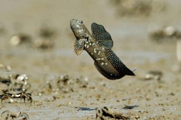 camur zipzipi - İlginç Canlılar