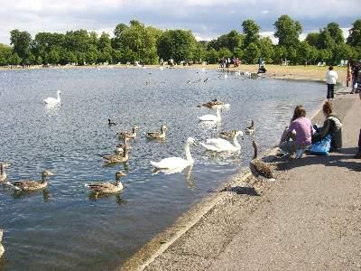 ケンジントンガーデンの池でエサをやる子供