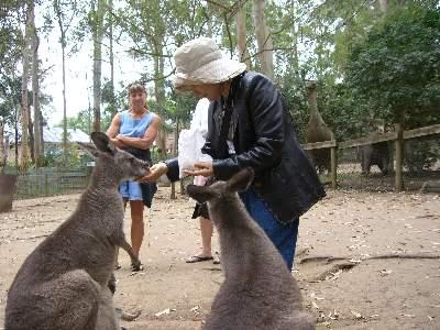 カンガルーに餌付けするお義母さん 2