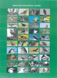 bird-identification-chart