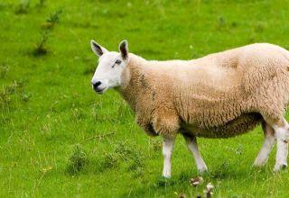 ¿Sueñan los androides con ovejas eléctricas? Review