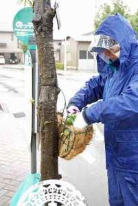 花かごの花苗植え替え作業