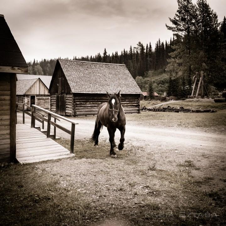 ©osztaba_cariboo_trail_20140824__DSF4500
