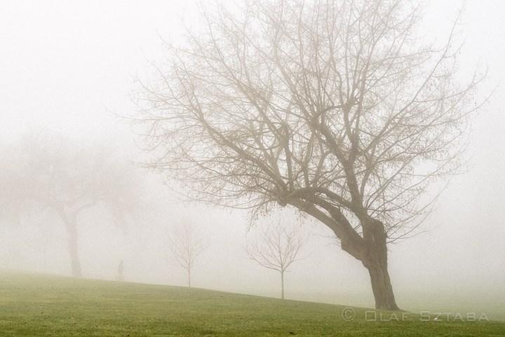 ©osztaba_fog_20150114__DSF3404