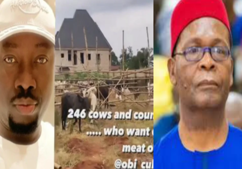 """""""Are We not Boycotting Northern Cows Any Longer"""" – Joe Igbokwe Reacts to over 250 Cows Gifted to Obi Cubana for Mother's Burial"""