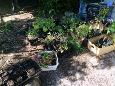 May 28 2017 to plant