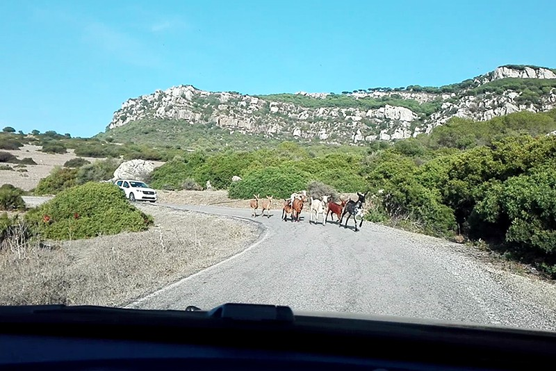 Roadtrip - Bilan - Lamas on the road - Olamelama blog
