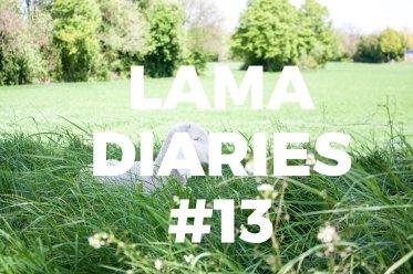 Image à la Une - Lama Diaries 13 Avril 2017 - Olamelama
