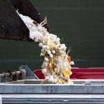 Naujas paukščių gripo protrūkis Nyderlanduose: kartus smūgis, teigia ministras