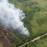 Liepsnos Nyderlanduose sunaikino didelę dalį gamtos draustinio