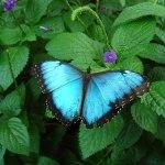 Nuo drugelių iki kūno meno: 12 puikių dalykų, kuriuos galima veikti rugpjūtį