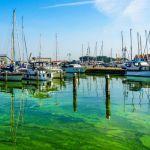 Atsargiai! Kai kuriuose vandens telkiniuose Nyderlanduose nesaugu maudytis