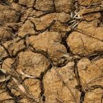 Oficialiai Nyderlanduose vandens trūkumas visos šalies mastu