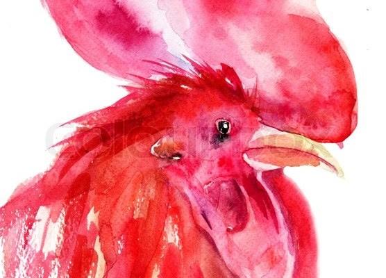 Die Insel: Ein schöner Hahn