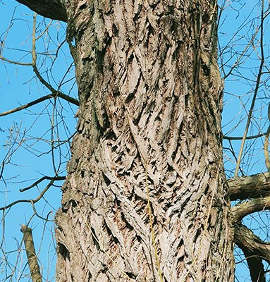 Beeindruckende Bäume