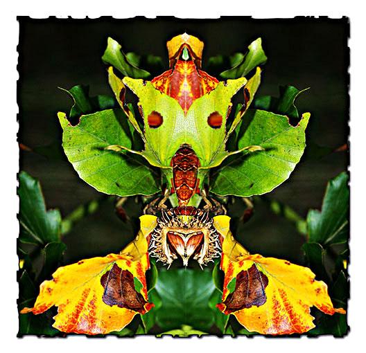 Blütentiere II