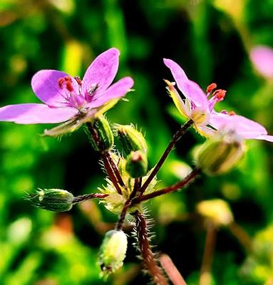 Neue Blüten in Wald und Wiese II