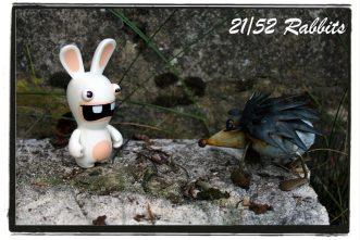 rabbit21