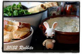 rabbit31