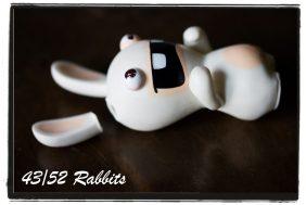 rabbit43