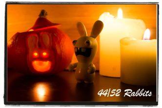 rabbit44