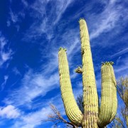 'Cacti and blue sky'
