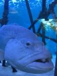 Making friends at the Florida Aquarium.