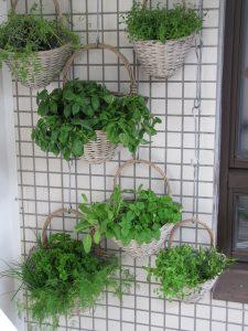 Fűszernövények az erkélyen