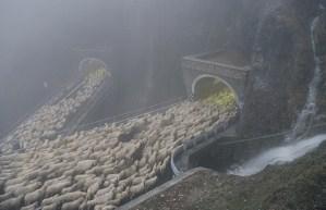 Transito sul Passo San Boldo (ph A. Malacarne)
