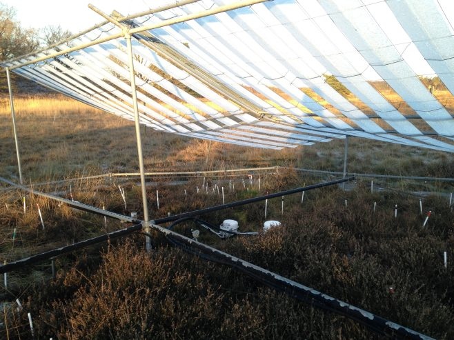 eosAC automated chambers beneath a permanent rain shelter (50% rain removal) at Brandbjerg.