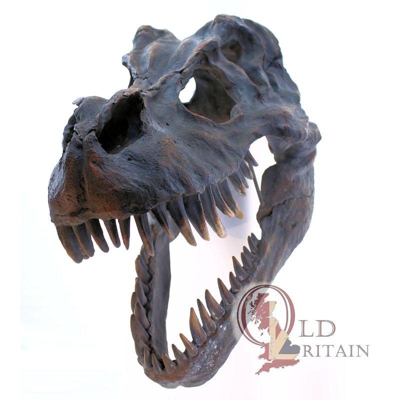 T-rex skulls
