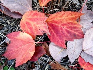 Bright Autumn--151