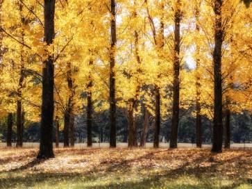 Bright Autumn--6