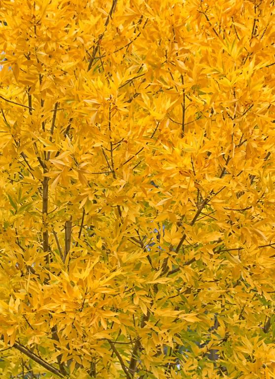 Bright Autumn--64
