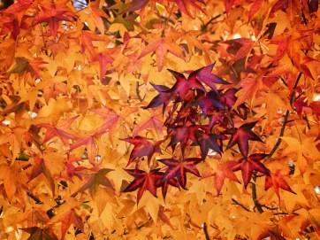 Bright Autumn--135