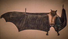 A drawing of a bat with enlarges testicles and penis