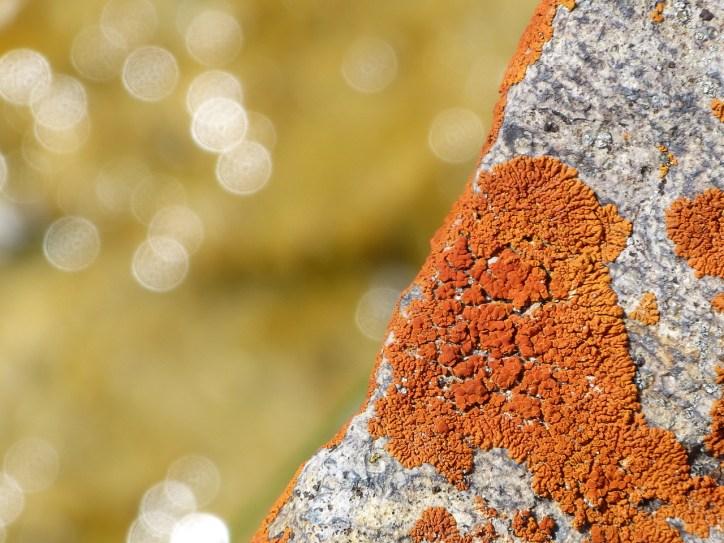 lichen and flares