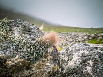 Rocks and Moss, St Kilda