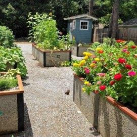 community-garden-2
