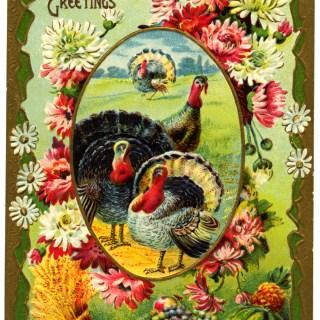 Thanksgiving Turkeys Vintage Postcard