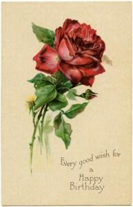 red rose postcard, vintage rose clipart, free digital graphics, antique flower image, printable rose card