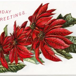 Free Vintage Image ~ Poinsettia Birthday Postcard