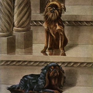 King Charles Spaniel and Brussels Griffon Dogs