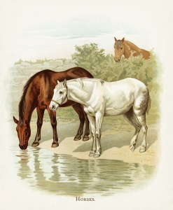vintage horse image, farm horses illustration, aged storybook page, horses drinking water, visit to the farm